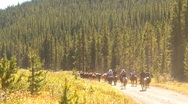 Stock Video Footage of horse roundup in mountains with cowboys, horse drive, wide shot