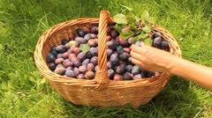 Appetizing plums Stock Footage