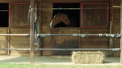 Riding school, two horses in stable with straw bale Stock Footage