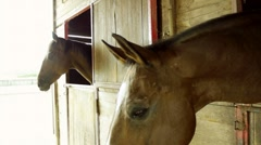 Riding school, two horses in stables, farm Stock Footage