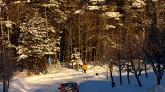 Scandinavia Finland Rauma man dog walk in winter snow Stock Footage