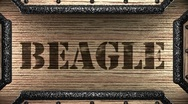 Beagle on wooden stamp Stock Footage