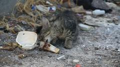 Kitten on a garbage dump Stock Footage