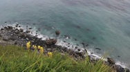Stock Video Footage of Alaska Beach Wildflowers