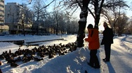 Stock Video Footage of Scandinavia Finland people feeding Mallards ducks in winter snow