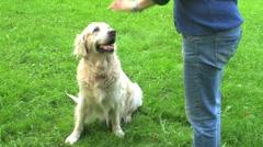 Dog training Stock Footage