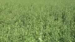 Field grass texture 01 Stock Footage