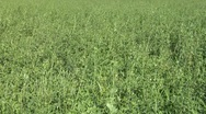 Stock Video Footage of field grass texture 01