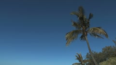 Mooloolaba Beach Palm Stock Footage