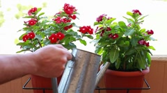 Watering plants Stock Footage