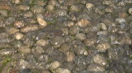 Stock Video Footage of water stream texture 02
