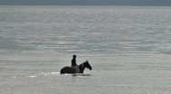 Stock Video Footage of Riding Horse into Bay Waters 1