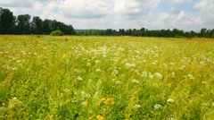 Pan landscape with summer meadow Stock Footage