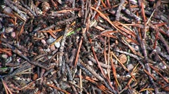 Ants and anthill, close-up Stock Footage
