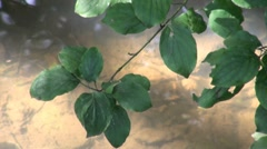 Leaves with River Background Stock Footage