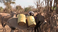 Kenya: Woman Loads Up her Donkey with Water Cans Stock Footage