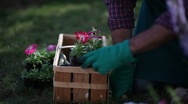 Gardener planting flowers; Full HD Photo JPEG Stock Footage