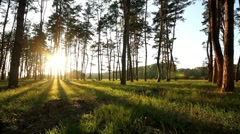 Pan forest at dawn. Stock Footage