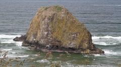 Sea mount ,bird sanctuary Stock Footage