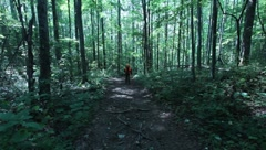 Hunter walking on path in woods towards camera(HD) c Stock Footage