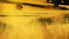 Village scenery. Harvest time. Stock Footage