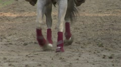 Horse race closeup 03 Stock Footage