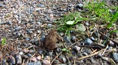 Small frog jumping Stock Footage
