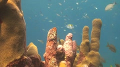 Coral with damsel fish Stock Footage