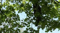 Bee Swarm 3 Stock Footage