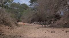Kenya: Dry Riverbed Stock Footage