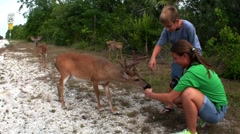 People feed deer along a road in Florida. Stock Footage