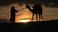 Stock Video Footage of Camel in the sunset with man leading in the sahara desert sunset