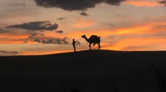 Camel jerks his trainer around in the desert sunset - stock footage