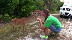 People feed deer along a road in Florida. - stock footage