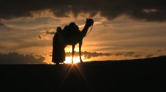Camel standing with man in the sunset of the sahara desert sand dunes - stock footage