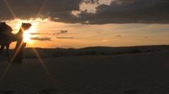 Leading a camel through the sahara desert sunset sand dunes Stock Footage