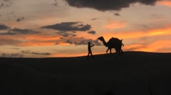 Struggling to make camel cooperate Stock Footage