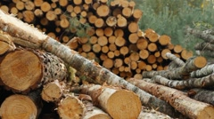 Timber Stock Footage