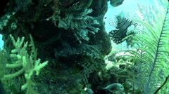 Beautiful green underwater seascape. Stock Footage