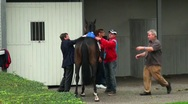 Stock Video Footage of Horse Racing 20110911-131054