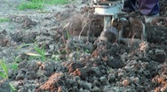 Motor cultivator in the plowed kitchen garden Stock Footage
