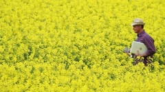 Farmer walking through a rape field holding a laptop; Full HD Photo JPEG Stock Footage