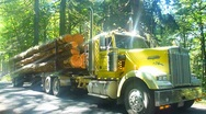 Stock Video Footage of Logging Truck in Forest Drive By 1