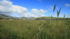 Dingle Harbour and Meadow, Ireland GFHD Stock Footage