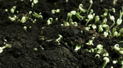 Growing beans dolly Stock Footage