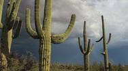 Saguaro Cactus Storm Scenic Stock Footage