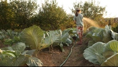 Stock Video Footage of girl watering cabbages