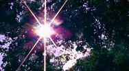 Stock Video Footage of Rays of Light through Branches pov Walking