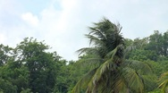 Stock Video Footage of Trees and Palm Trees Blowing in the Wind