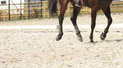 Dressage horse Stock Footage